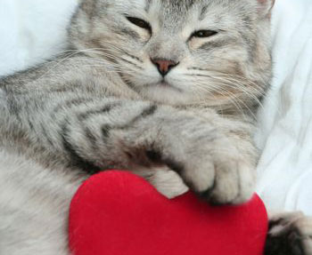 grey-cat-with-heart_sml