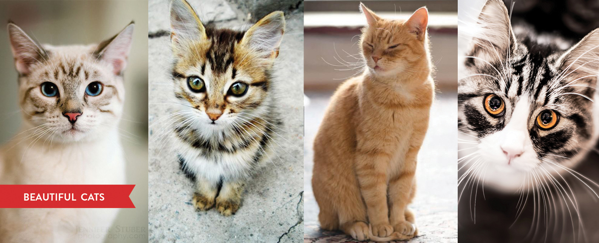 Best-Looking-Cats
